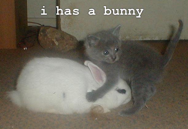 i has a bunny